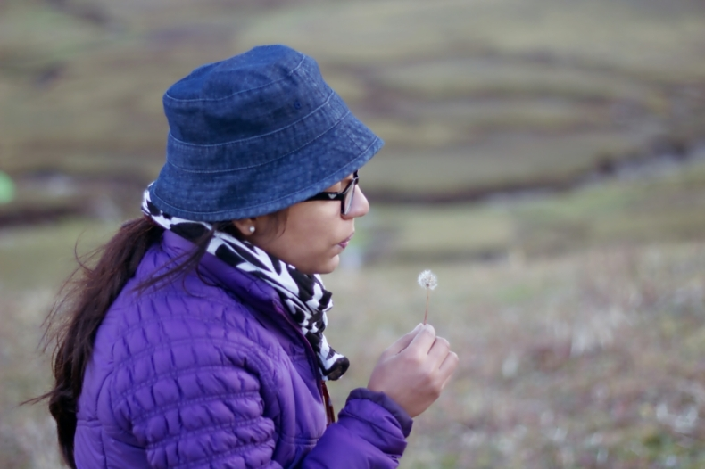 Blow on a Dandelion and make a wish!