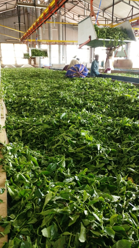 Inside Tea Factory