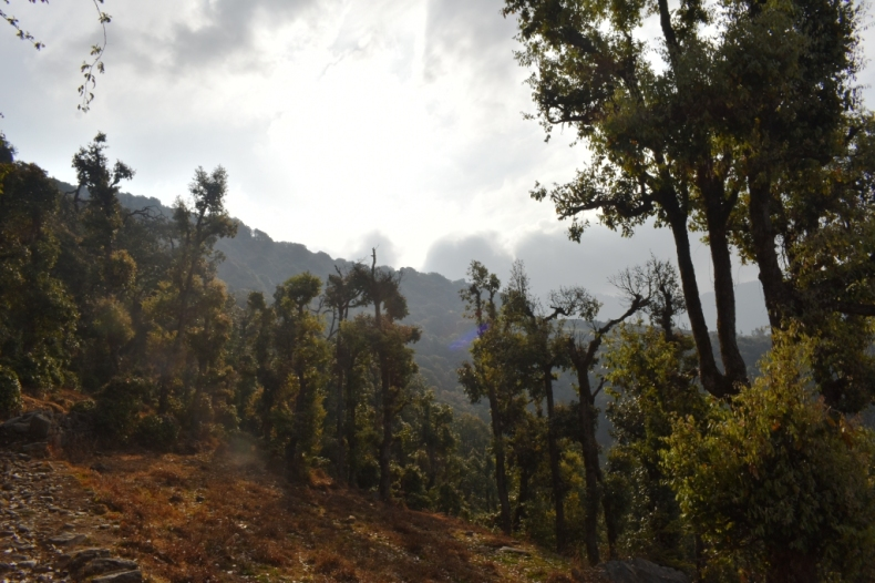 Trees on the way to Nag Tibba Summit